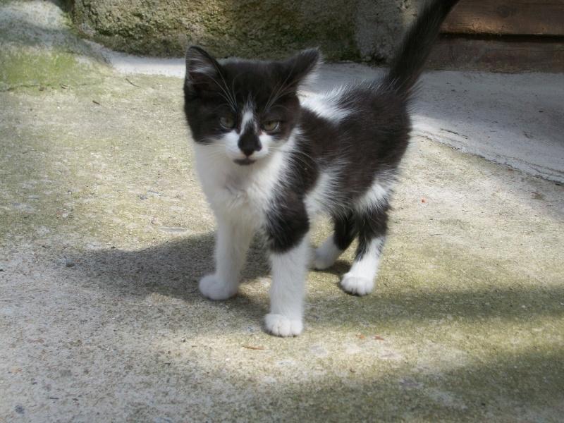 CARMINE (chaton femelle noire et blanche) 101_1342
