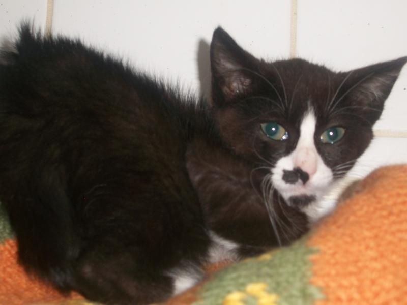 Artiste (chaton noir et blanc) Fresqu16