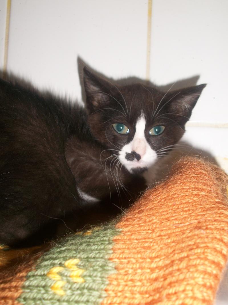 Artiste (chaton noir et blanc) Fresqu17