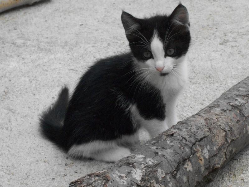 Miko (chaton mâle noir et blanc) Lectur53