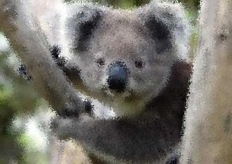 Guess the Creature (3) Koala10