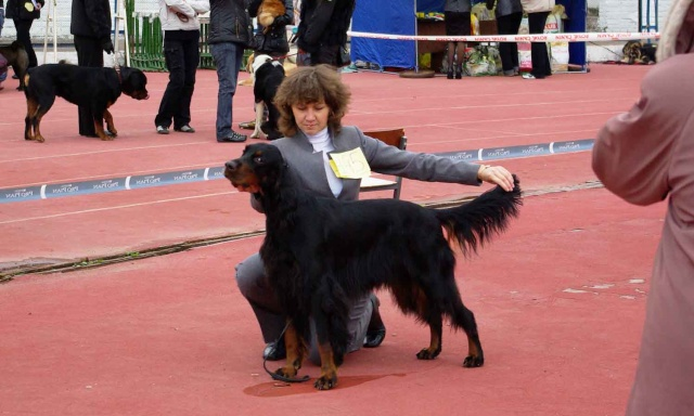 Региональная выставка собак всех пород. Комсомольск-на-Амуре. 4 октября. Sg104110
