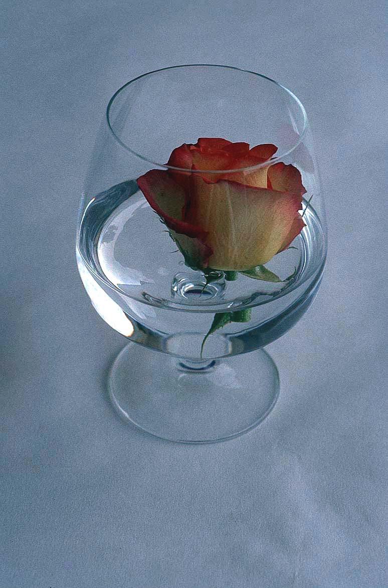 Martedi 24 Febbraio Rose-i10