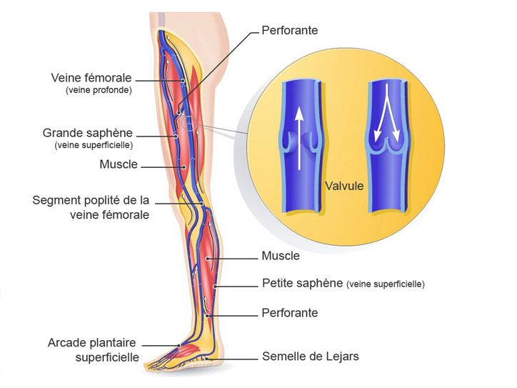 Problèmes de circulation, jambes lourdes? Body Karaté ! Schema10