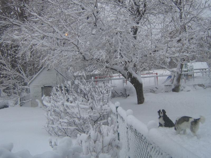 Bordée de neige du 25 Février 2012 00115