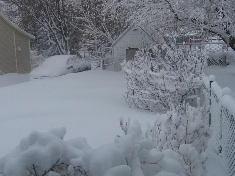 Bordée de neige du 25 Février 2012 00215