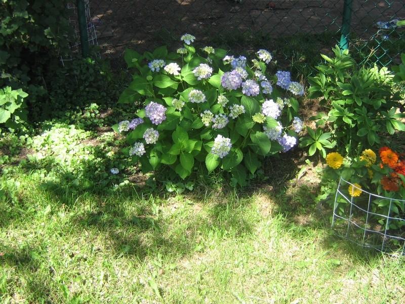 Mes Arbres et Arbustes et fleurs - Page 3 00610