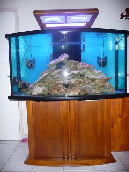 Aquarium atelier de marianne beluga 550 litres P1040910