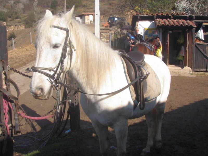 Aravalle 2012 P3220020