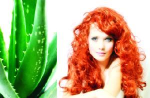 نبات الصبار وحيوية الشعر .. لقاء الحرير والشوك ! 34440011