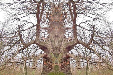 """تقرير عن أشجار مرعبة في """"الديلي ميل """" 498a5210"""