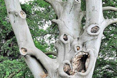 """تقرير عن أشجار مرعبة في """"الديلي ميل """" Ab2210"""
