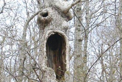 """تقرير عن أشجار مرعبة في """"الديلي ميل """" Ab2310"""