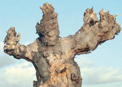 """تقرير عن أشجار مرعبة في """"الديلي ميل """" Ab2410"""