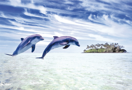 الدلافين تنام بعين واحدة F8b64b10