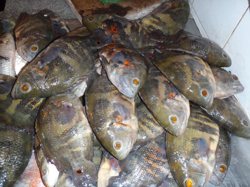 Question/Réponse Voyage au Pérou. ( croisière aquario solidaire 2012) - Page 3 Pa080410