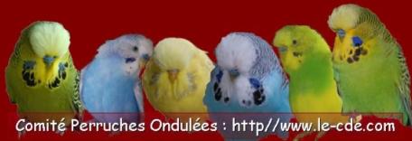 Comité Perruches Ondulées - CDE - Portail Bannia10