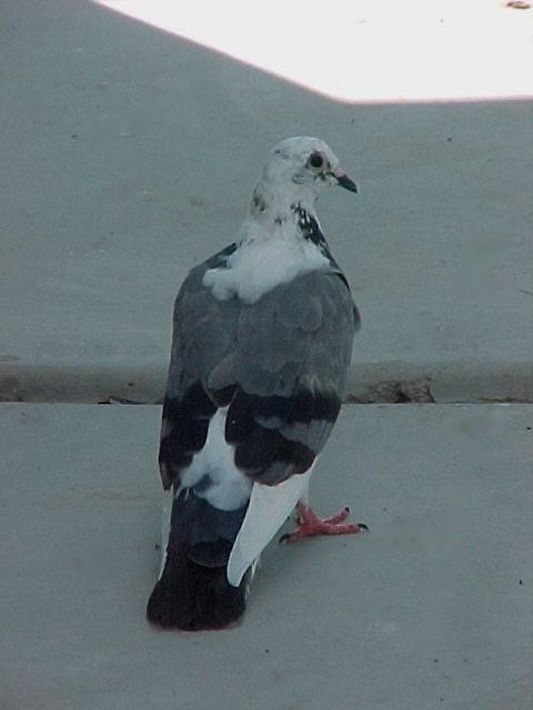 Handsome Visitor 2011-017