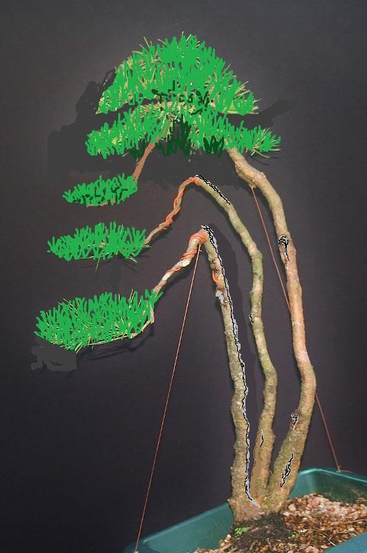 scotts pine raw material - have a virtual play 00153110