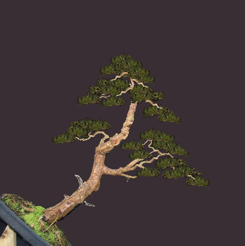 scotts pine raw material - have a virtual play 00479910