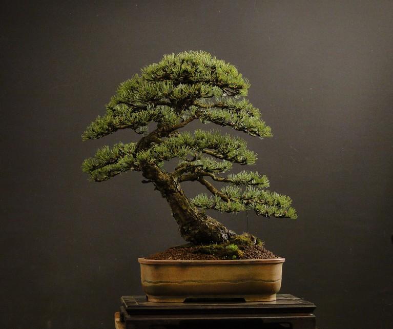 Pinus mugo 2004 - Page 3 Mra_310