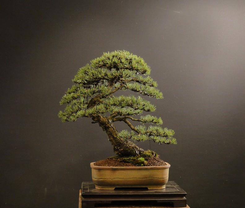 Pinus mugo 2004 - Page 3 Mra_410