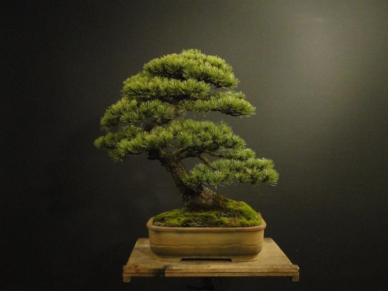 Pinus mugo 2004 - Page 3 Pro10