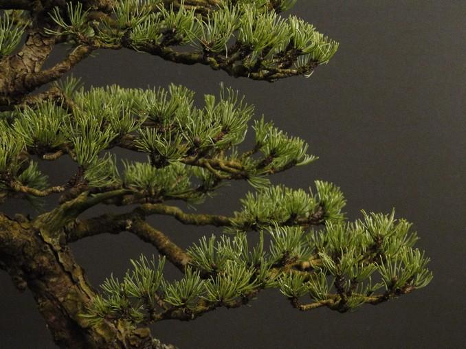 Pinus mugo 2004 - Page 3 Pro_310