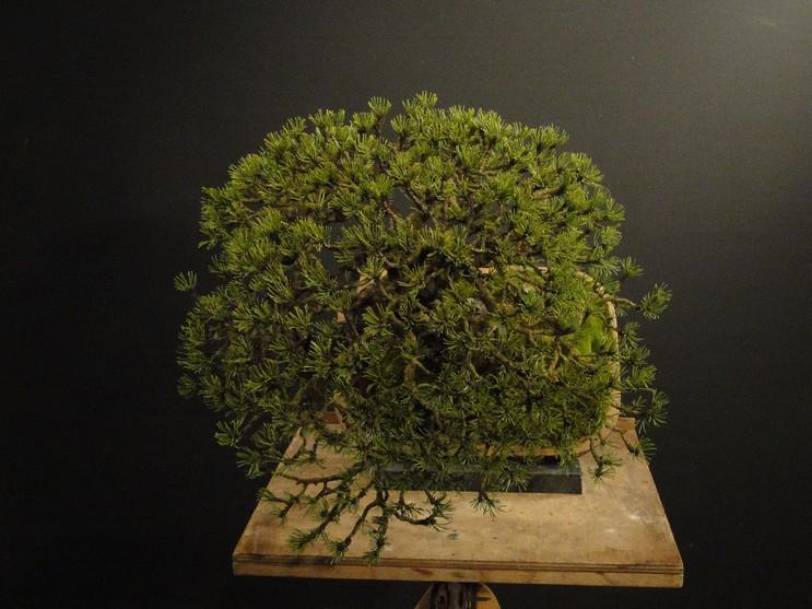 Pinus mugo 2004 - Page 3 Pro_410