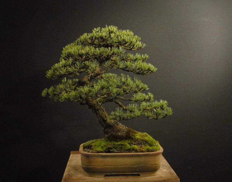 Pinus mugo 2004 - Page 3 Pro_510