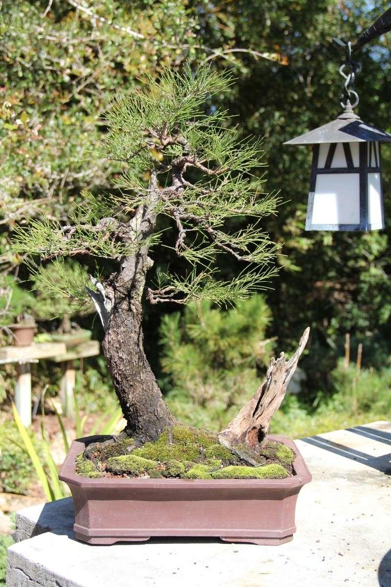 Aussy Pine Update Img_1515