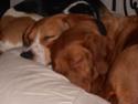 chiens anxieux et très stressés....où mes mesaventures avec bidule .... - Page 3 P1280010
