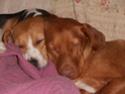 chiens anxieux et très stressés....où mes mesaventures avec bidule .... - Page 3 P3010110