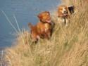 chiens anxieux et très stressés....où mes mesaventures avec bidule .... - Page 4 P3280110