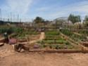 Débuter un potager / en jardinage - Page 11 P6050111