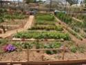 Débuter un potager / en jardinage - Page 11 P6050112