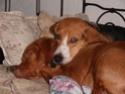 chiens anxieux et très stressés....où mes mesaventures avec bidule .... - Page 2 Pc090012