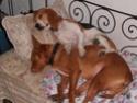 chiens anxieux et très stressés....où mes mesaventures avec bidule .... - Page 2 Pc090013