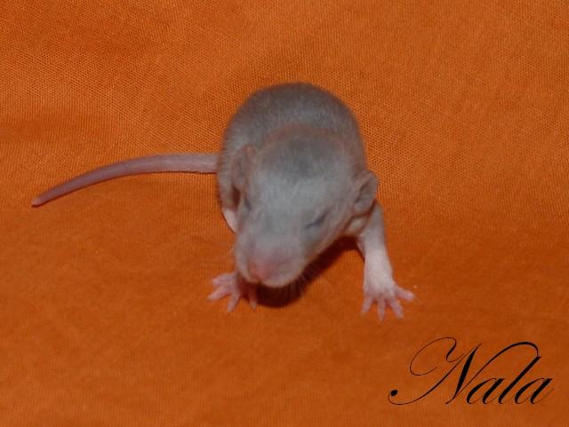 NIN Chanelle xXx NIN Néo - Page 8 P1310121
