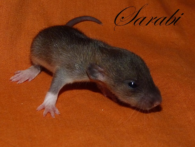 NIN Chanelle xXx NIN Néo - Page 8 P1310211