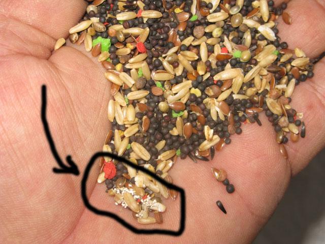 Méfiez-vous du mélange KIKI qui se trouve sur le marché actuellement(2011)!!! Img_1420