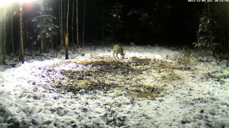 Boars cam, winter 2012 - 2013 Vlcsn197