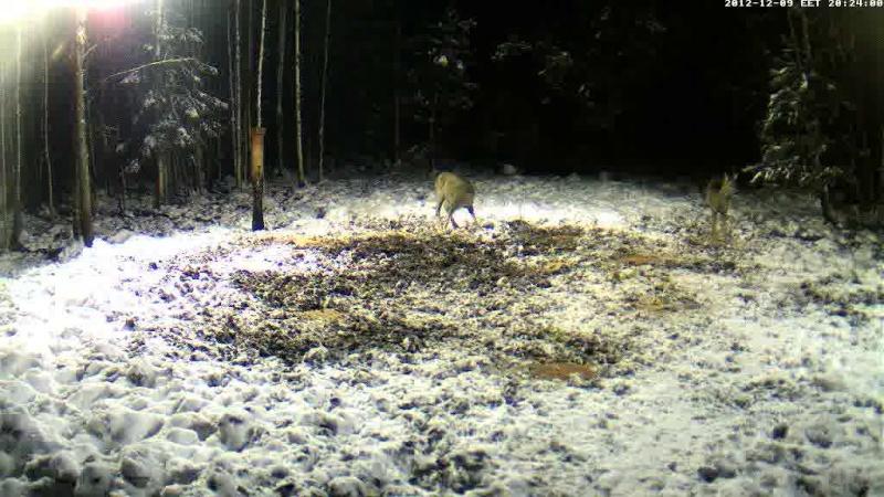 Boars cam, winter 2012 - 2013 Vlcsn198