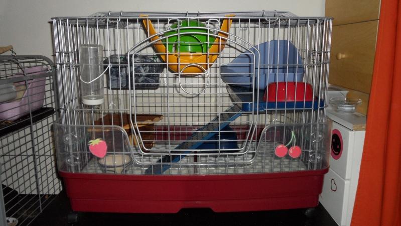 [78-RP] Vends cage Tridoor basse avec accessoires. PRIX BAISSE Sam_0711