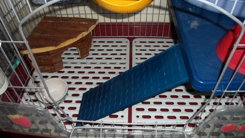 [78-RP] Vends cage Tridoor basse avec accessoires. PRIX BAISSE Sam_0713