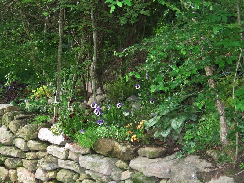 Mon petit jardin, une autre passion :) Img_0099