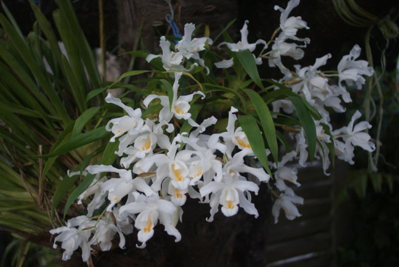 Floraisons du mois d'Avril - Page 4 Dsc05115