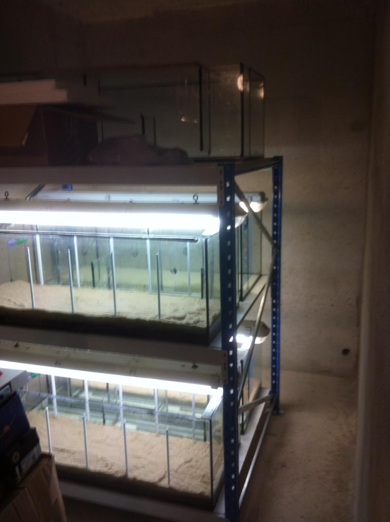 Créer une batterie d'aquarium soit même au meilleur prix Neon_113