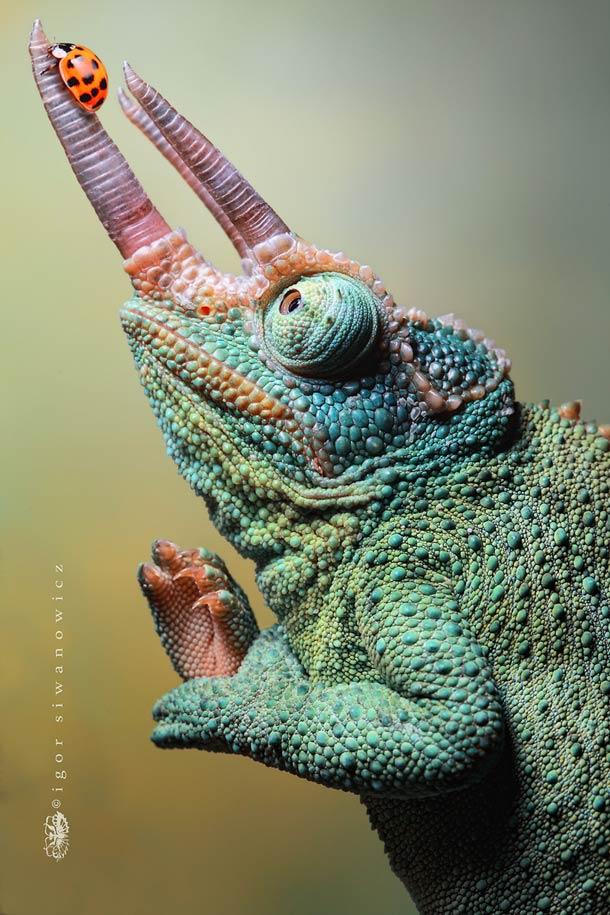Vos images sympatoches sur les reptiles ! Insect10