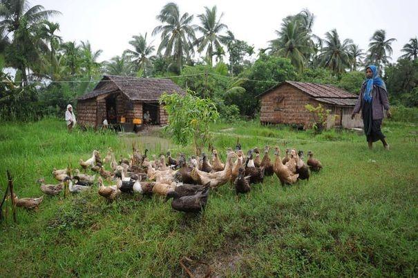Le microcrédit, un espoir de réduire la pauvreté dans les campagnes birmanes 37397010